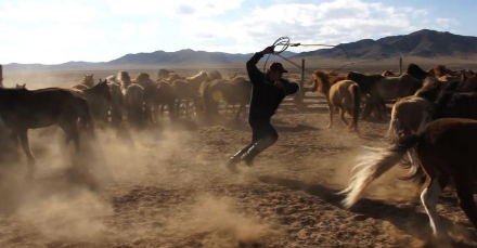 A young herder throws a lasso to capture a horse in Mongolia.